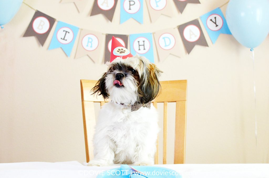 Shih Tzu Puppy Birthday Party with pup cakes