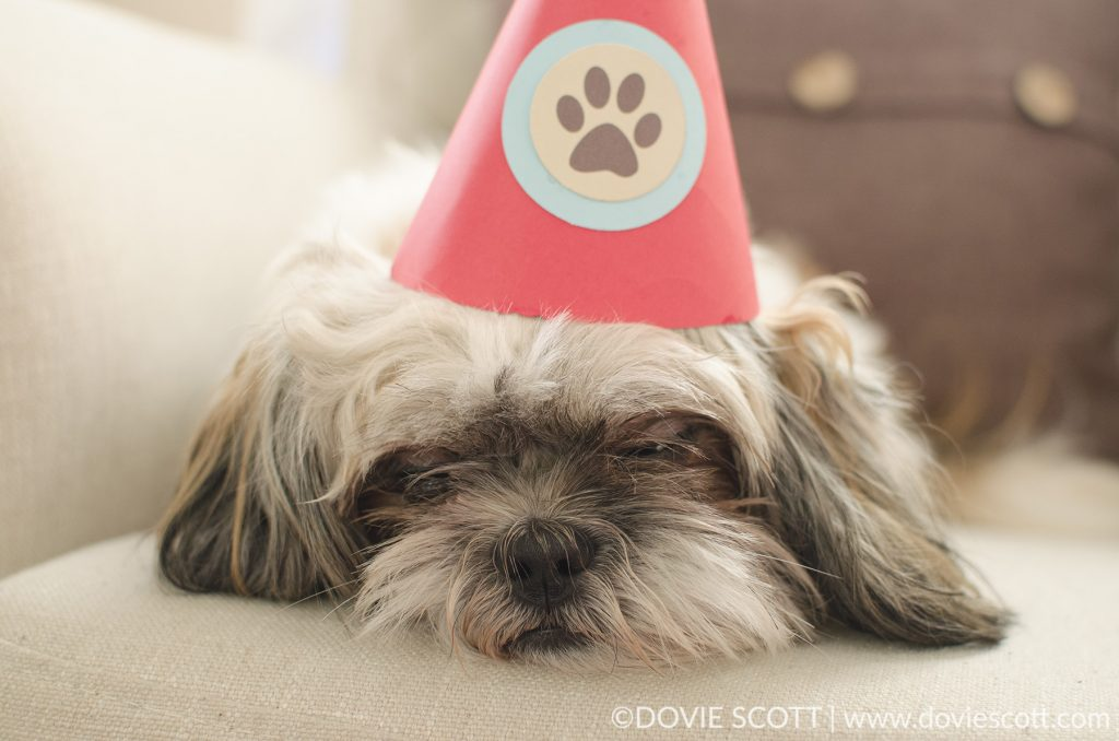 Sleepy birthday pup