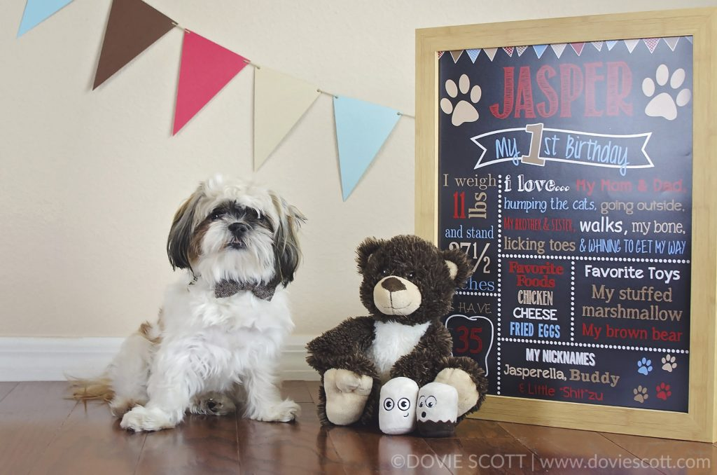 Dog First Birthday Photos