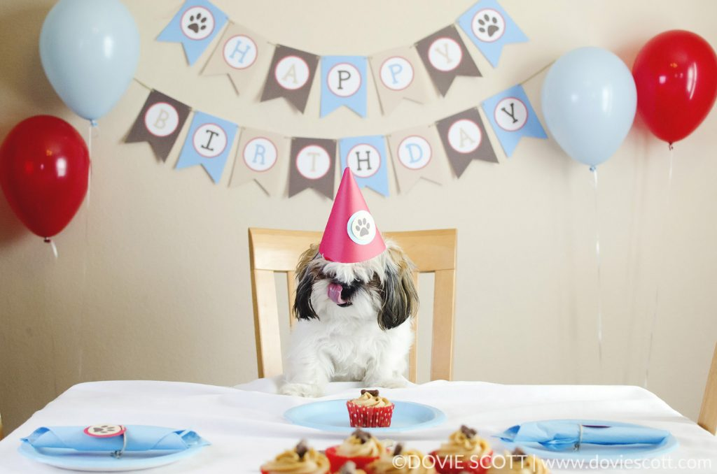 Shih Tzu birthday party